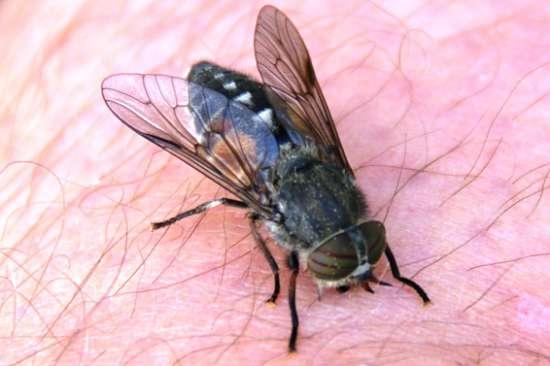 Mückenplage 2021